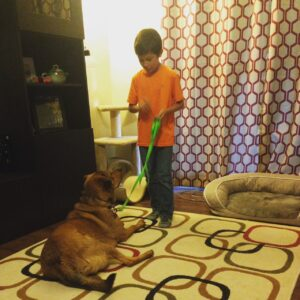 Our Dallas Dog Trainer always recommends in-home training!