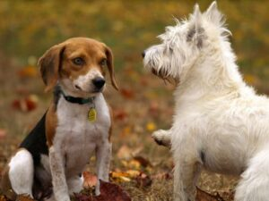 learn how to correct aggression and anxiety in dogs