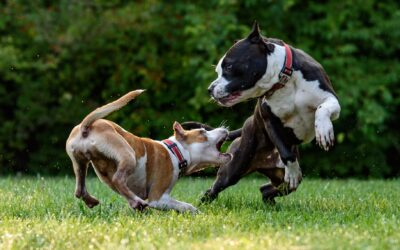 Anxiety Leads to Aggression: Don't Let it Happen to Your Dog!